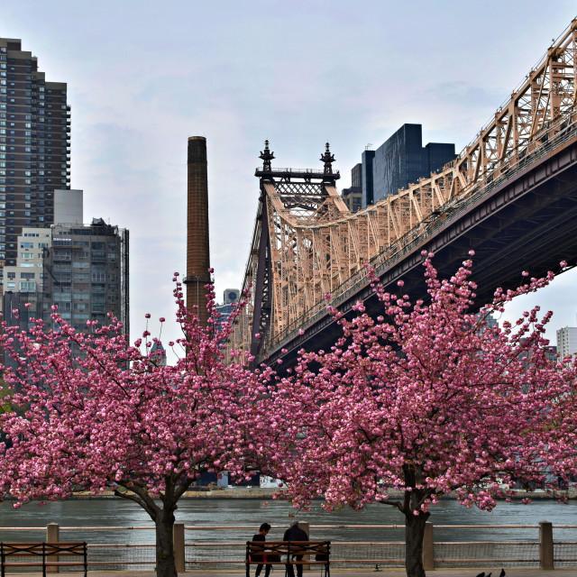 """Queensboro Bridge - Roosevelt Island"" stock image"