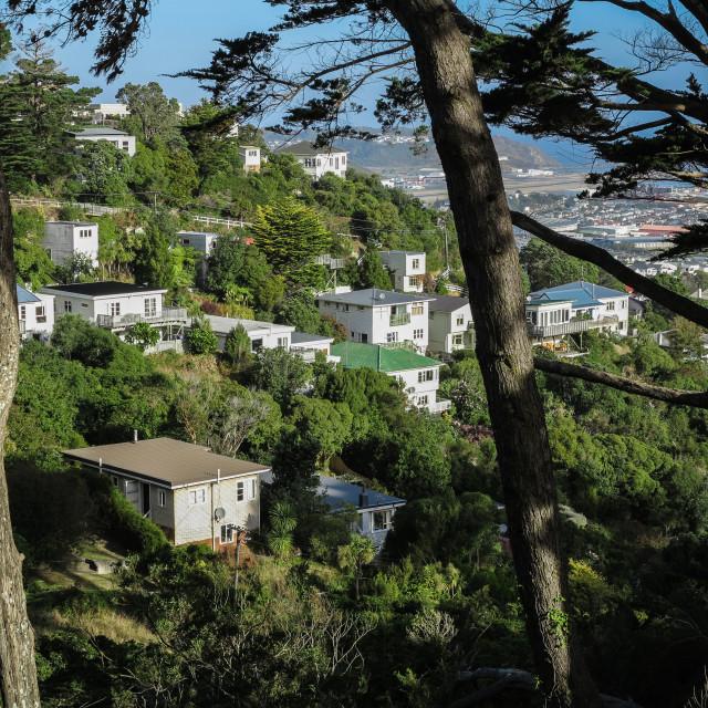 """Hillside suburb, Wellington."" stock image"