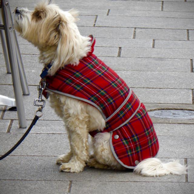 """""""Dog Waiting for Godot"""" stock image"""
