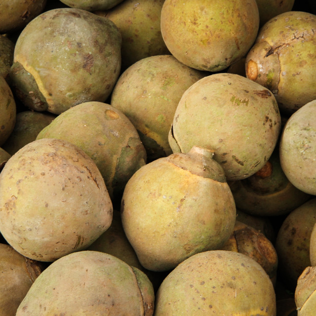 """South American Sapote"" stock image"