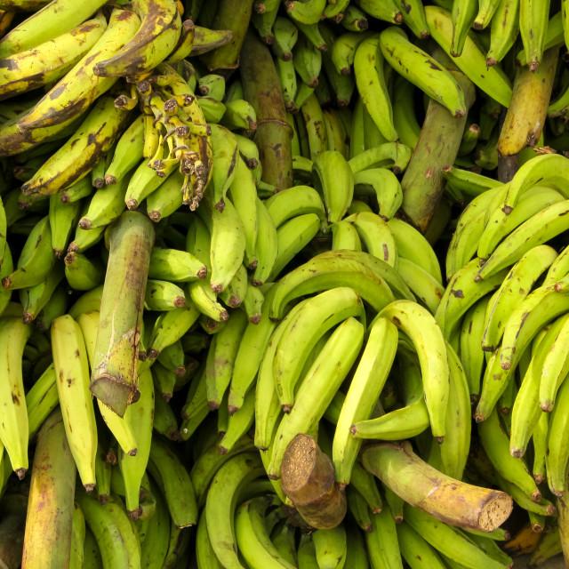 """""""Bananas"""" stock image"""