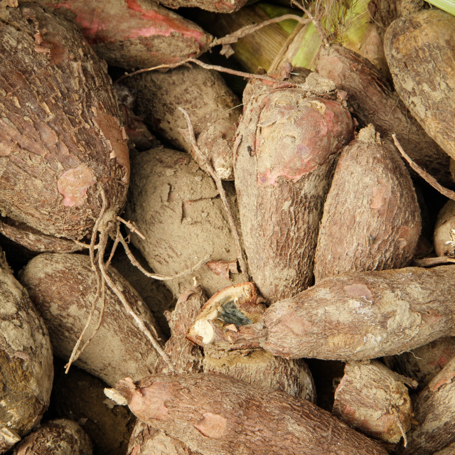 """Yuca, or Cassava, at market"" stock image"