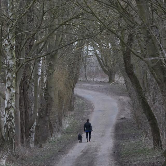 """""""Woodland Path."""" stock image"""