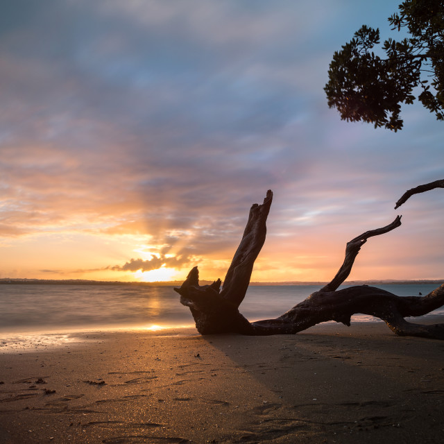 """Sunset at a Auckland beach"" stock image"