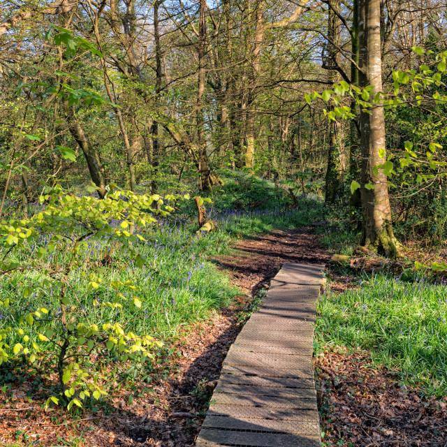 """""""Woodland Nature"""" stock image"""