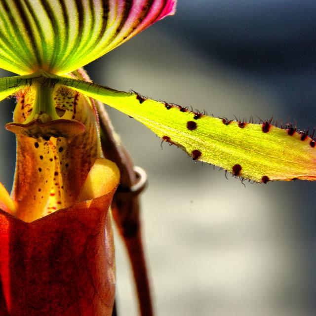 """""""Orquidea"""" stock image"""