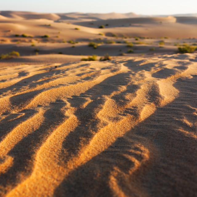 """""""Early Morning Desert"""" stock image"""