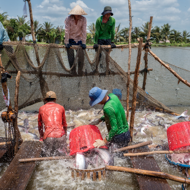 """Catching catfish in the Mekong river"" stock image"