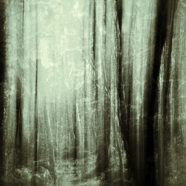 """Forest II"" stock image"