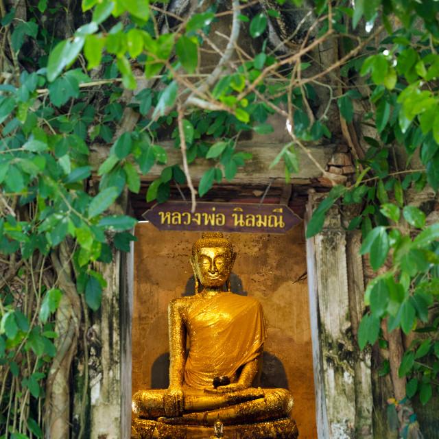 """Golden Buddha statue"" stock image"