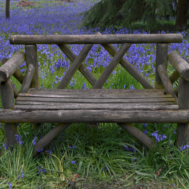 """Bench and Bluebells"" stock image"