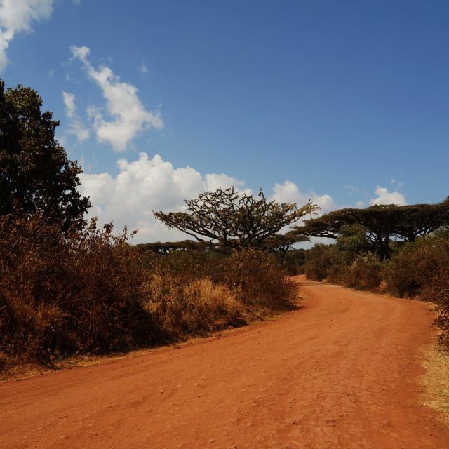 """Road to Safari"" stock image"