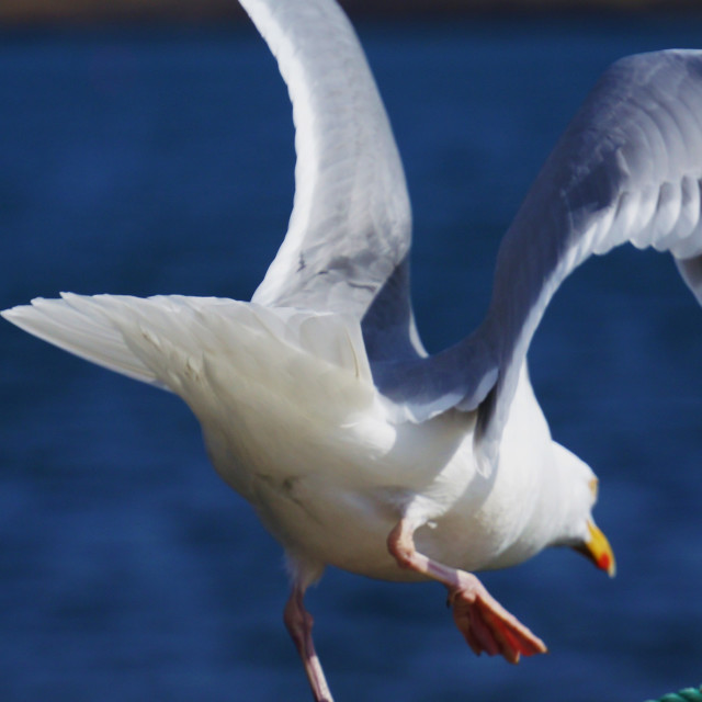 """Seagull Launch"" stock image"