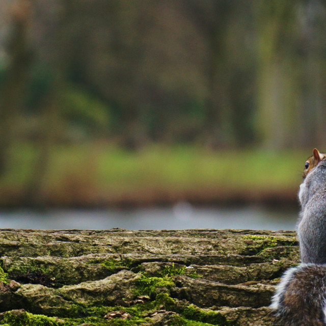 """A Squirrel's View"" stock image"