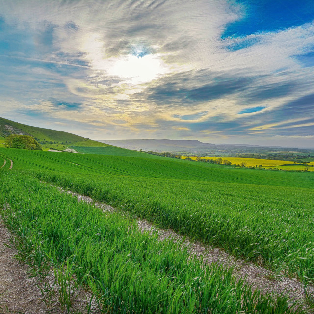 """South downs -England"" stock image"