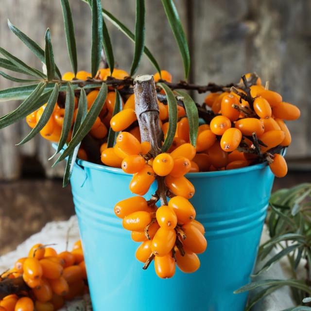 """""""Organic ripe sea buckthorn"""" stock image"""