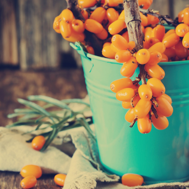 """Ripe sea buckthorn berries"" stock image"