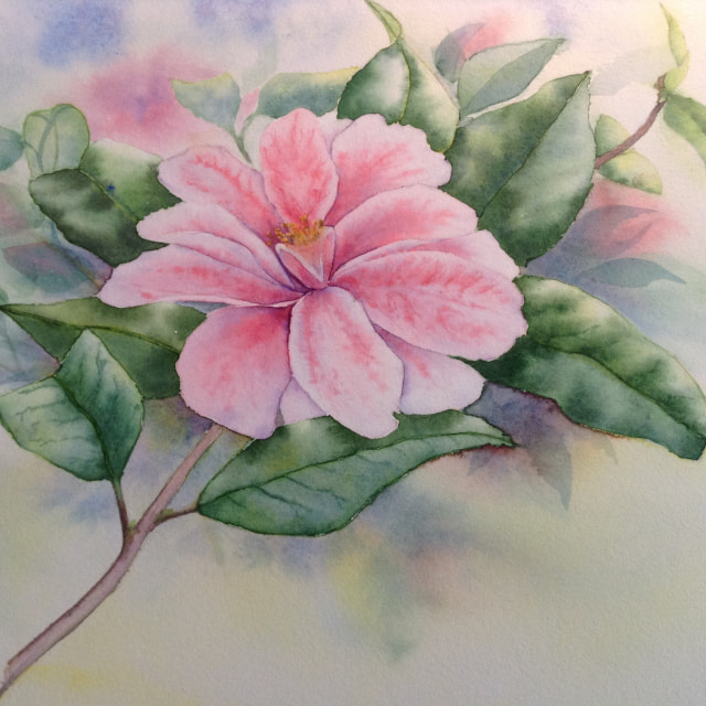 """Camellia watercolour"" stock image"