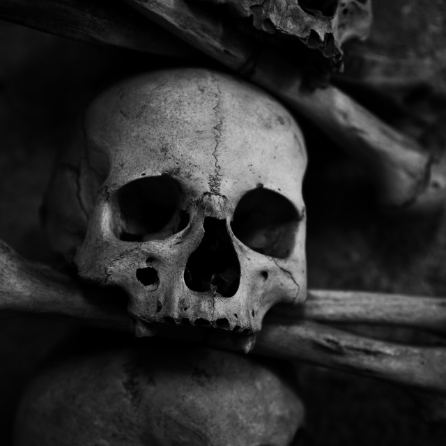 """collection of skull and bones"" stock image"