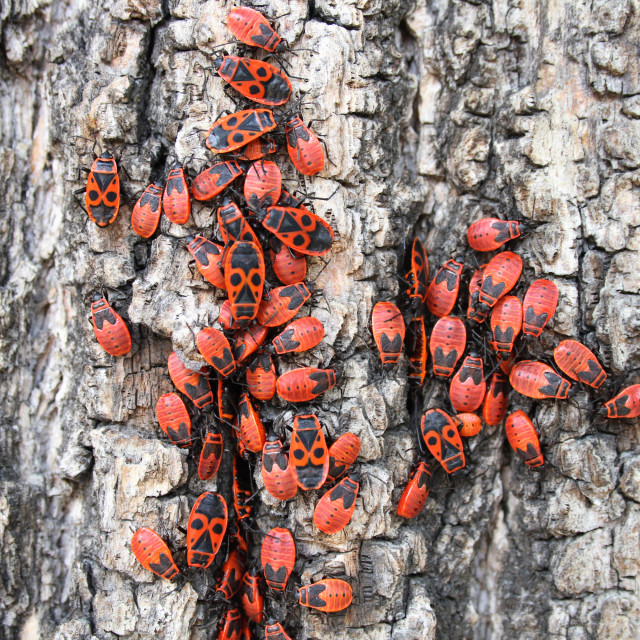 """""""red bugs"""" stock image"""