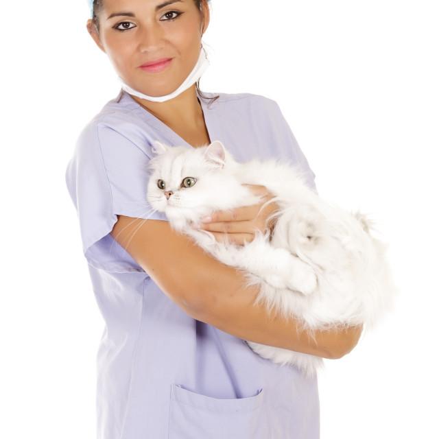 """veterinary holding cat"" stock image"