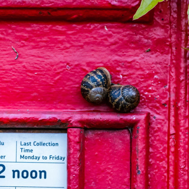 """""""Snail Mail"""" stock image"""