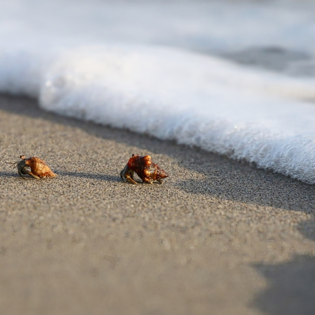 """""""Hermit Crab by the shoreline"""" stock image"""