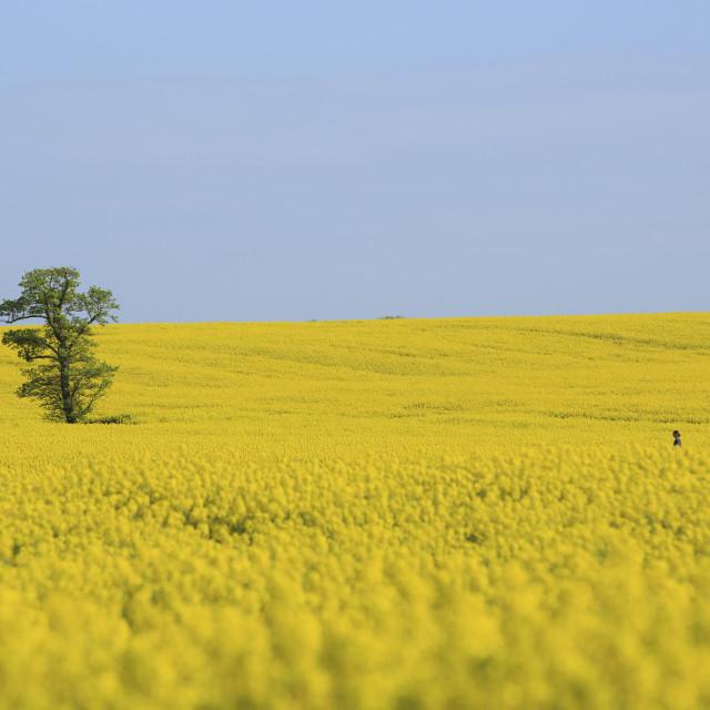 """Farmland"" stock image"