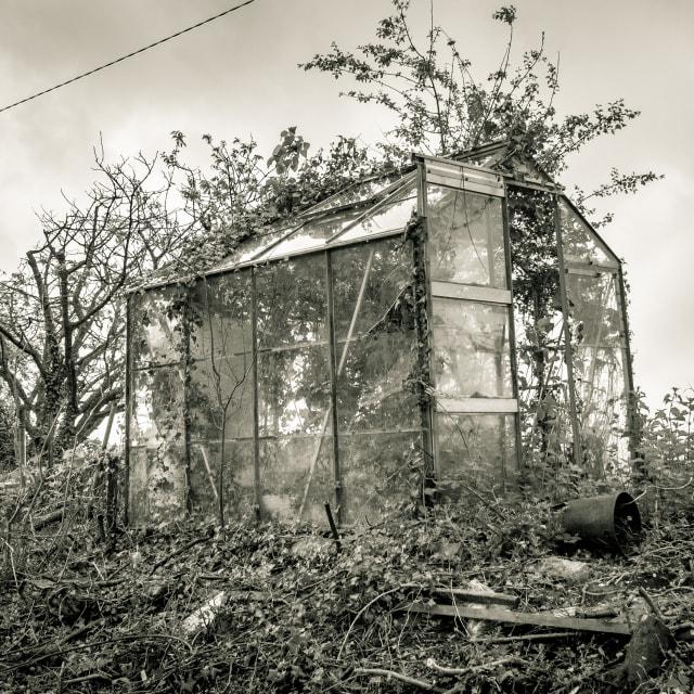 """Greenhouse"" stock image"