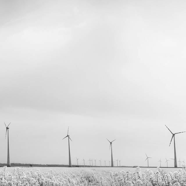"""""""many windmills rotating during windy spring cloudy day on oil r"""" stock image"""