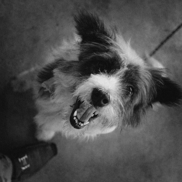"""""""My Dog !"""" stock image"""