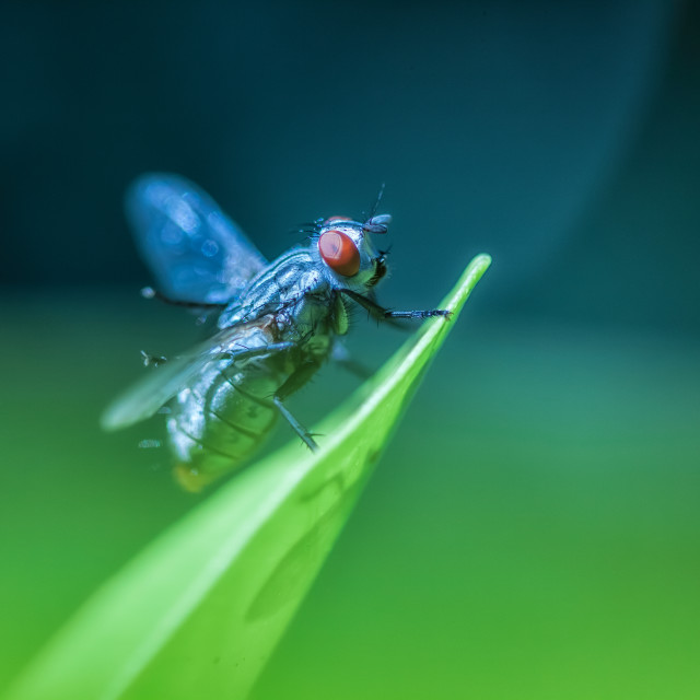 """The Fly"" stock image"