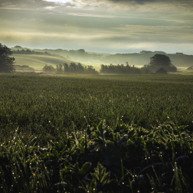 """Province morning."" stock image"