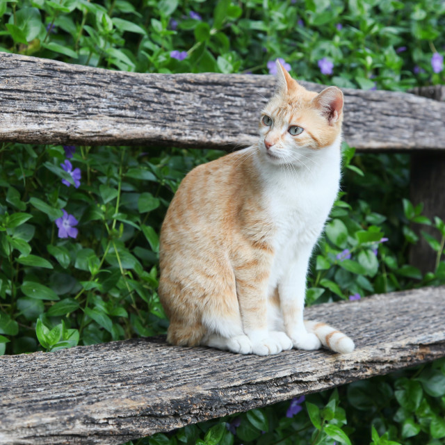 """Cat sitting on a bench"" stock image"