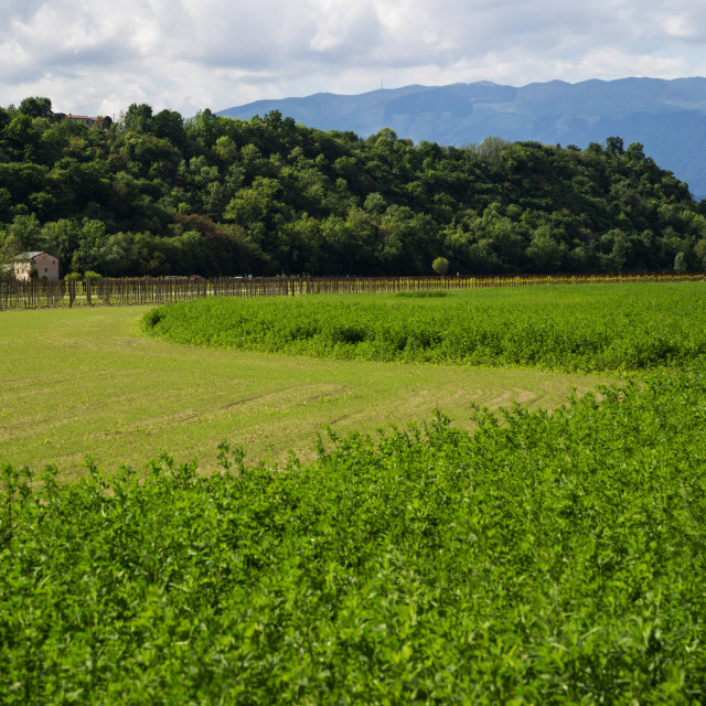 """""""Hilly landscape in Italy"""" stock image"""