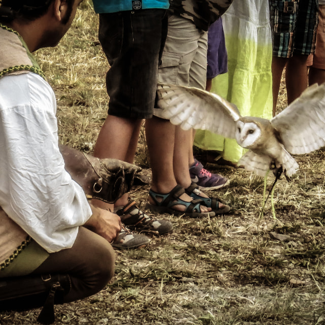 """Barn Owl in Trasmoz, Aragon Spain, Falconry, flying"" stock image"