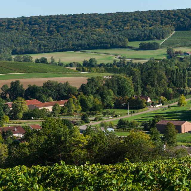 """""""Champagne vineyards in the Cote des Bar Aube"""" stock image"""