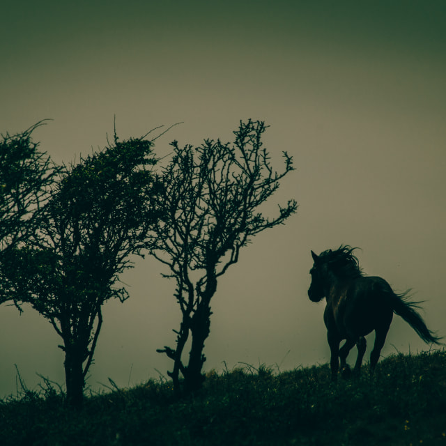 """Twilight Horse"" stock image"