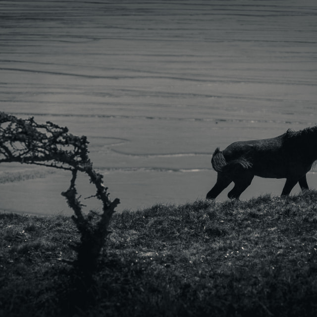 """A Black Horse on the Coast"" stock image"