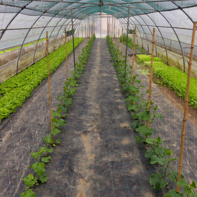 """""""Perspective view of a greenhouse"""" stock image"""