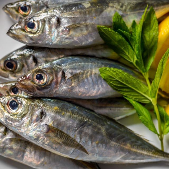 """Fresh mackerel with lemon and fresh herbs"" stock image"