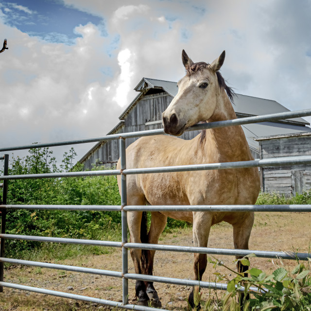 """""""A Horse and Barn"""" stock image"""
