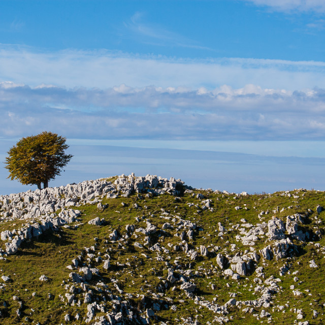 """""""Lone tree in mountain"""" stock image"""