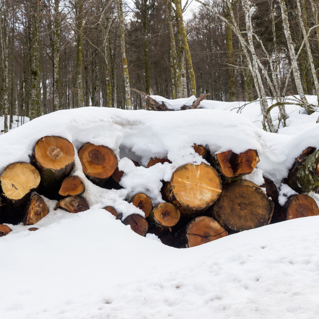 """View of a stack of firewood covered by snow"" stock image"