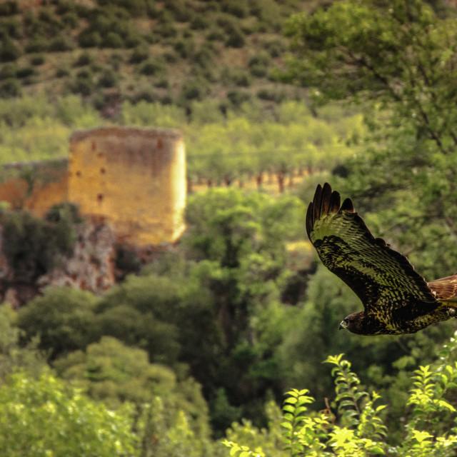 """""""Hawk, eagle, falcon, kestrel in monasterio de piedra, Zaragoza, Aragon Spain"""" stock image"""