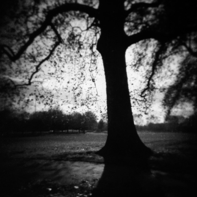 """Urban Park Tree - medium format Holga"" stock image"