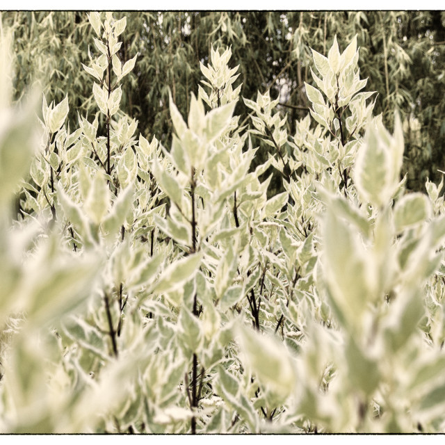 """Plant field"" stock image"