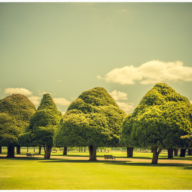 """Triangular Trees & Blue Summer Skies"" stock image"