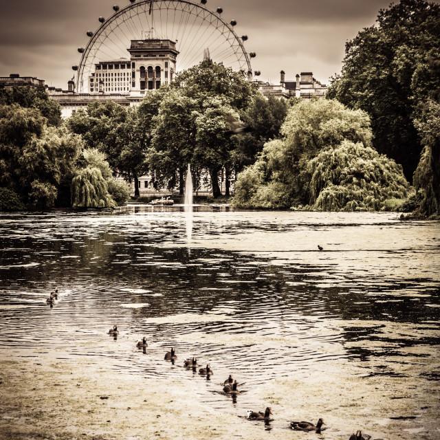 """""""London Eye Ferris Wheel over St James Park"""" stock image"""