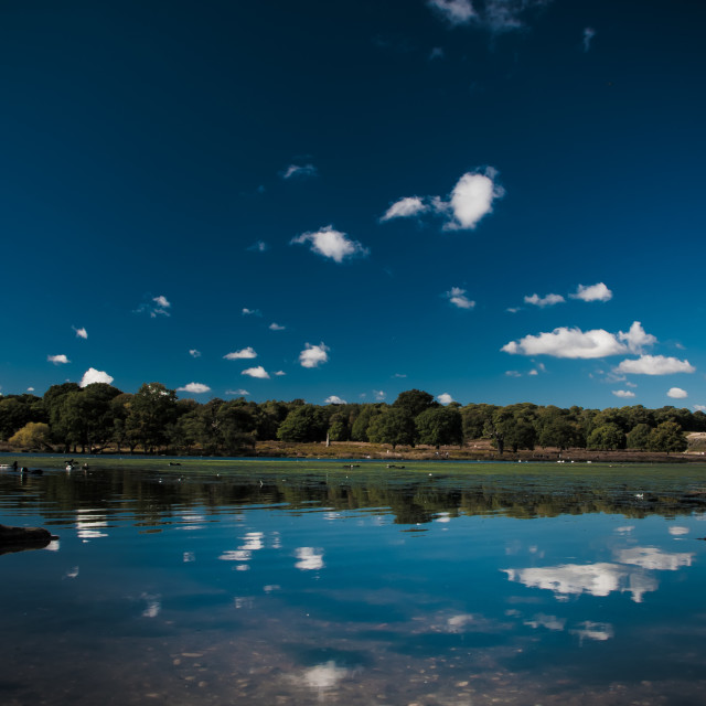 """Richmond Pond Reflections"" stock image"